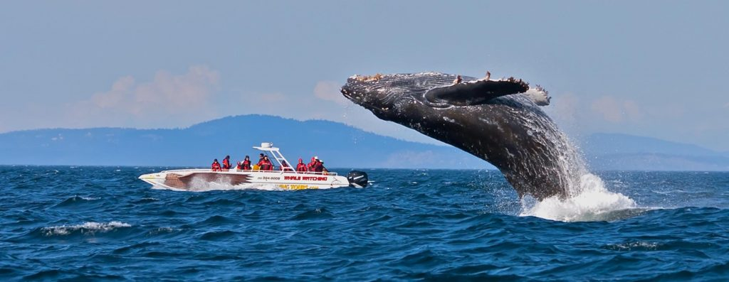 Spending time with the Giant whales
