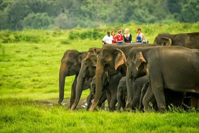 Udawalawe National Park-one of the best places to visit in Sri Lanka