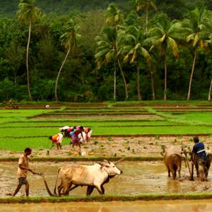 Weekend Agriculture – Chitradurga treks