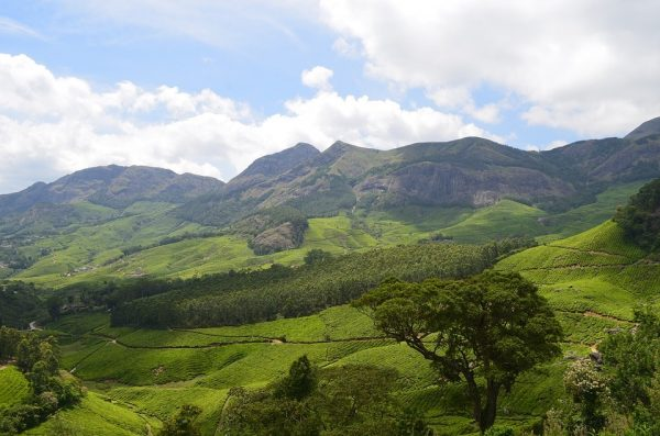 Hill stations in munnar