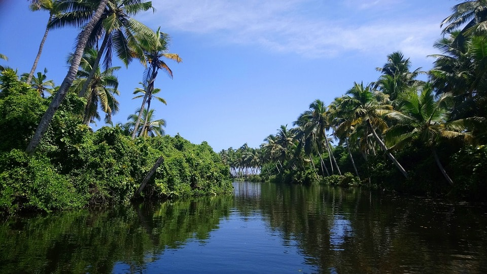 backwaters are some of the interesting tourist places in Kerala