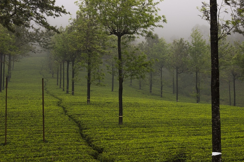 tea garden are best tourist places in kerala
