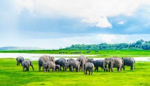 Top 10 National Parks in Sri Lanka (2020)