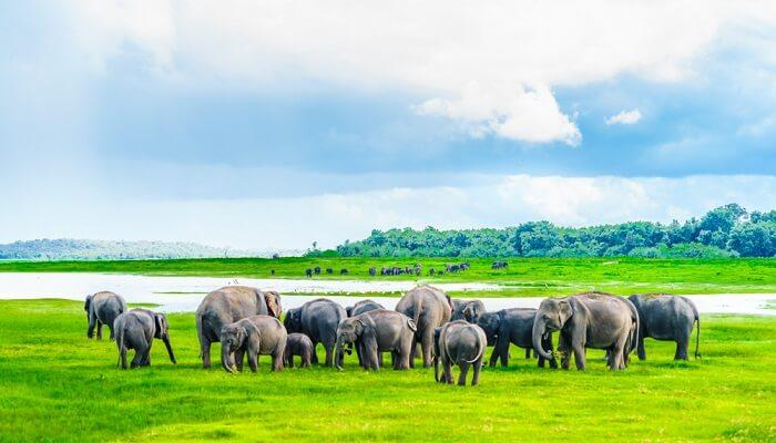 Top 10 National Parks in Sri Lanka (2021)