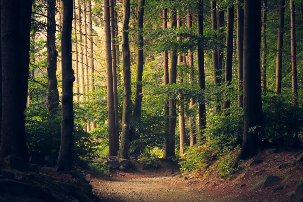 Nature's Secret to Travel